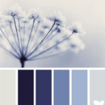 'winter tints' courtesy of designseeds.com